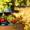 50% Off Wine Tasting at Elk Run Vineyards