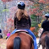 Up to 54% Off Horseback-Riding Camp or Trail Ride