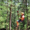 48% Off Zipline and Obstacle Course