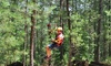 Daredevil Ziplines - Governor's Towne Club: $34 for a Aerial Zipline and Obstacle Experience for One at Daredevil Ziplines ($65 Value)