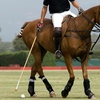 Up to 47% Off Horseback-Riding Lessons