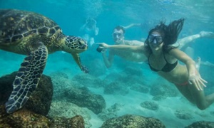 Hawaii Turtle Tours: Turtle Eco Tour with 60 Minutes of Snorkeling for One, Two, or Four from Hawaii Turtle Tours (Up to 28% Off)