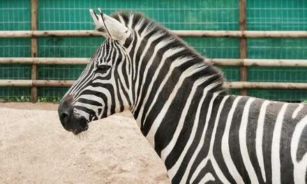 Zoo Entry for an Adult and Child or a Family of Four at Ventura Wildlife's Zoological Gardens