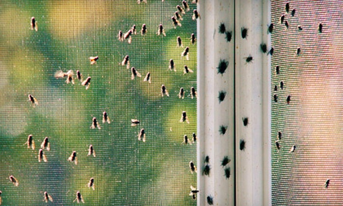 Green Pest Solutions - Philadelphia: Pest-Treatment Package from Green Pest Solutions (Up to 67% Off). Two Options Available.