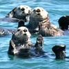Up to 51% Off Gull Island Boat Tour in Homer