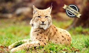 Naturwildpark Granat: Familien-Tagesticket für den Naturwildpark Granat ab 8 € (bis zu 53% sparen*)