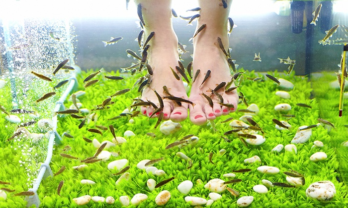 Délires de Femmes - Petit Couronne: 1 séance de fishpedicure de 30 min, option modelagedes pieds de 10 min dès 19,90 € chez Délires de Femmes