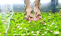 30 Min. Fisch-Pediküre inkl. Fuß-Massage, Fußbad und Getränk bei FishSpa Leonberg im Sanitätshaus Arnold (38% sparen*)