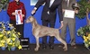 Golden Gate Kennel Club Dog Show   - Cow Palace: Golden Gate Kennel Club Dog Show for Four at Cow Palace on January 24 or 25 (Up to 42% Off)