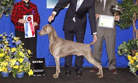 Golden Gate Kennel Club Dog Show for Four at Cow Palace on January 24 or 25 (Up to 42% Off)