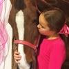 40% Off Horseback Riding Lesson