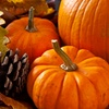 Half Off Pumpkins, Gourds, and Holiday Decorations