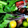 52% Off One-Year Co-Op Membership from Urban Acres