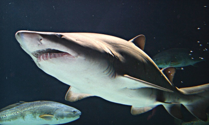 """SEA LIFE Minnesota Aquarium - South Loop: $25 for """"Sharks After Dark"""" Event for Two at Sea Life Minnesota Aquarium (Up to $49.98 Value). Three Dates Available."""
