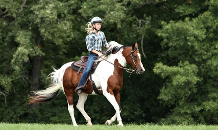 Two or Four Group Horseback Riding Lessons from Everything Equine (50% Off)