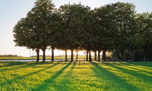 Cowboy's Stump-n-Grind: $75 for $250 Toward Tree Care and Removal from Cowboy's Stump-n-Grind