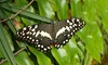 World of Wings - Teaneck: Butterfly-Exhibit Visit for Two, Four Mommy and Me Classes, or Visit for Four at World of Wings (Up to 50% Off)