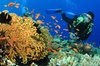 London International Dive Show 2014 - London: London International Dive Show 2014 Ticket for £6.25 at ExCel London (Up to 64% Off)
