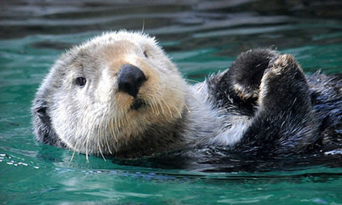 Seattle Aquarium - Pike Place  Market: Seattle Aquarium Visit for One or Two Adults (Up to 40% Off)