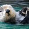 Seattle Aquarium – Up to 40% Off a Visit