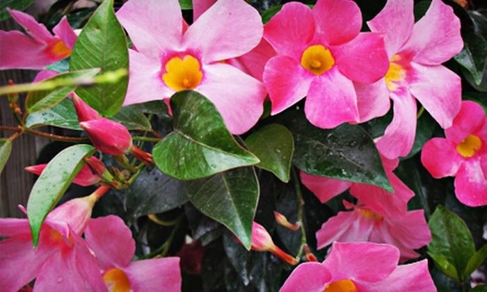 Canterbury Farms Wholesale Nursery, Inc. - Port Richey: $20 for $40 Worth of Plants, Trees, and Shrubs at Canterbury Farms Wholesale Nursery, Inc.
