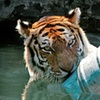 Up to 64% Off Zoo Brew at Blank Park Zoo