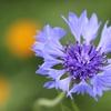Fort Worth Botanic Garden – Half Off Plants
