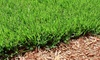 Artefacto Landscapes LLC: One Hour of Lawn Maintenance or One Hour of Tree and Shrub Trimming from Artefacto Landscapes LLC (Up to 56% Off)