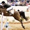 Up to 50% Off a Horse Show for Two or Four