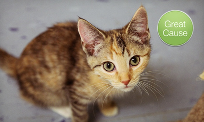 Second Chance Pet Adoptions - Raleigh / Durham: $10 Donation to Help Sterilize Cats and Dogs