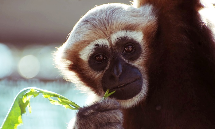 Gibbon Conservation Center - Canyon Country: Admission for Two or Four or Private Tour for Up to 10 to Gibbon Conservation Center (Up to 50% Off)