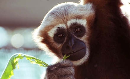 Admission for Two or Four or Private Tour for Up to 10 to Gibbon Conservation Center (Up to 50% Off)