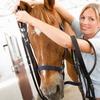 39% Off Horseback Riding at Seaton Hackney Stables