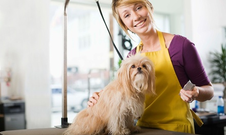 Basic Dog Grooming at Honey B's Grooming (Up to 52% Off). Four Options Available.