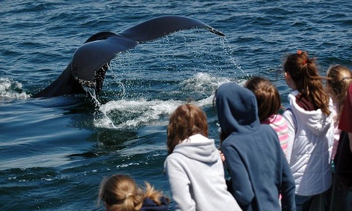 Capt. John Boats - Plymouth: $56 for a Whale-Watching Tour for Two from Capt. John Boats (Up to $94 Value)
