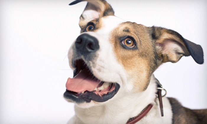 Tail Waggerz Pet Care - Nonantum: Dog Washing, Dog Boarding, or Doggy Daycare at Tail Waggerz Pet Care (Up to 67% Off). Three Options Available.
