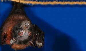 Noctalis Welt der Fledermäuse: Eintritt für 2 Erwachsene, optional mit 2 Kindern, ins Noctalis – Welt der Fledermäuse ab 8,50 € (bis zu 50% sparen*)