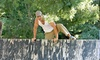 HAWC Gym Inc - Crow Canyon: Competitive Obstacle Course Entry from HAWC Gym Inc (55% Off)