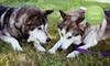 $10 Donation to Texas Alaskan Malamute Rescue