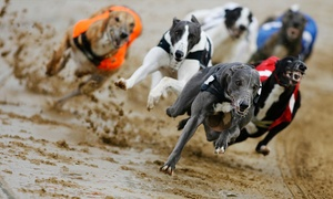 Love The Dogs: Greyhound Racing For Two With Burger, Drink and Race Card (Up to 82% Off)
