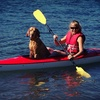 51% Off Dolphin Cruise or Kayak Tour for Two