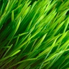 Up to 54% Off Lawn Mowing