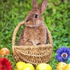 Easter Bunny Tea – Up to 52% Off Interactive Tea Party
