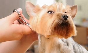 PurrFurred Pet Styling: Grooming for Small, Medium, Large, or Extra-Large Dog, or Cat at PurrFurred Pet Styling (Up to 47% Off)