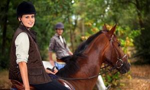 Centro Ippico Toscano: 3 o 5 lezioni di equitazione per bambini e ragazzi (sconto fino a 86%)
