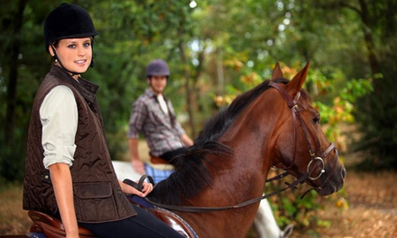 Trail or Pony Ride or One or Four Private Horseback-Riding Lessons at Black Creek Hill Farms (Up to 44% Off)