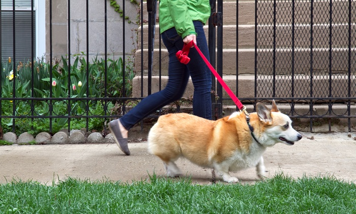 Angelic Paws Pet Services - Boston: One Dog-Walking Session or One Week of Dog Walking from Angelic Paws Pet Services (Up to 53% Off)