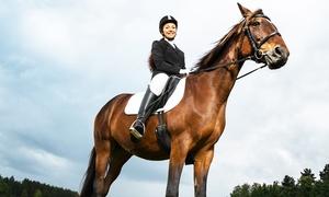 ASSOCIAZIONE SPORTIVA IPPICA DILETTANTISTICA GONDRANO E BERTA: 5 o 7 lezioni di equitazione con monta all'inglese da 34,99 €