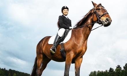 Lezioni di equitazione fino -71%