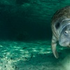 Up to 43% Off Manatee Eco-Tour and Shelling Adventure
